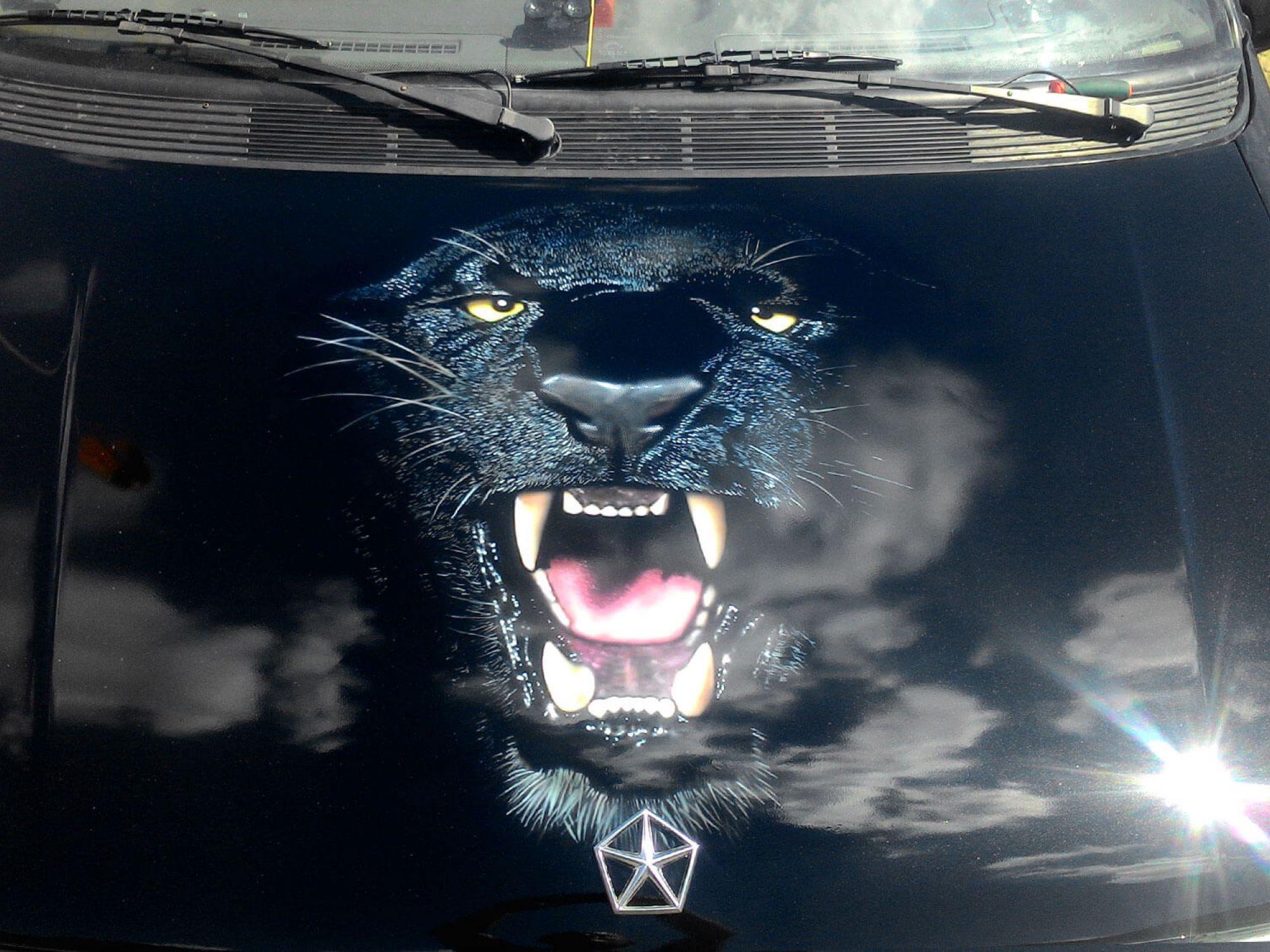 Наклейки дикой кошки на авто фото